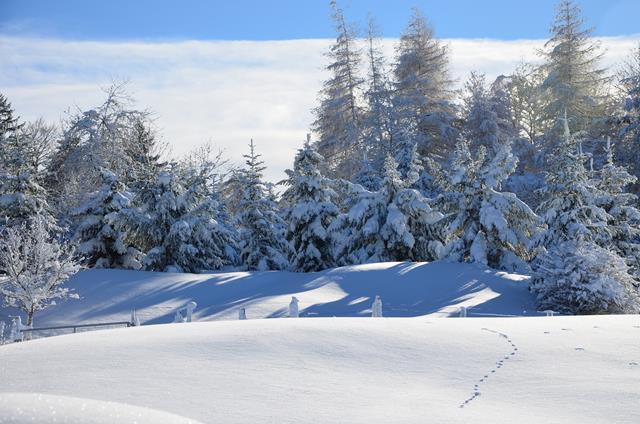Winter 151217.36 (Copy).JPG